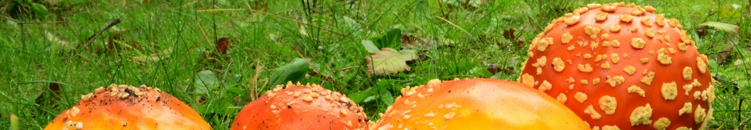 Kitsap Peninsula Mycological Society